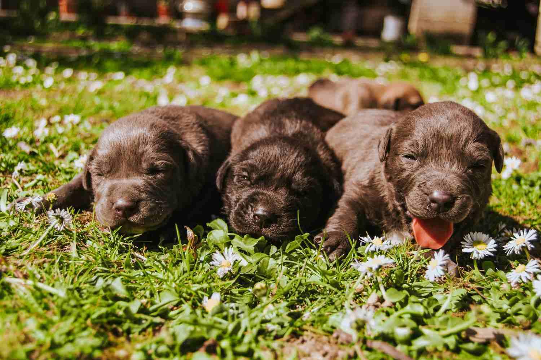 Máme doma štěně: příprava na nového člena rodiny