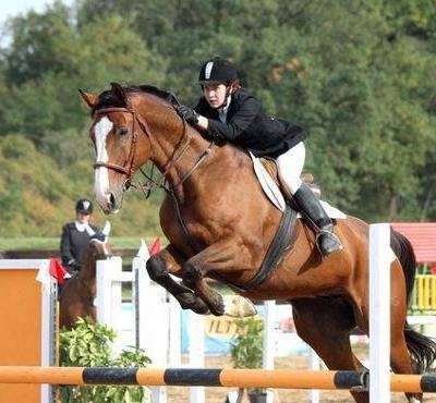 Proč je kolagen pro koně tak důležitý a jak jim ho doplnit?